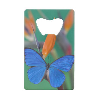 Sammamish Washington Photograph of Butterfly on 2