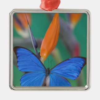 Sammamish Washington Photograph of Butterfly on 2 Christmas Ornament