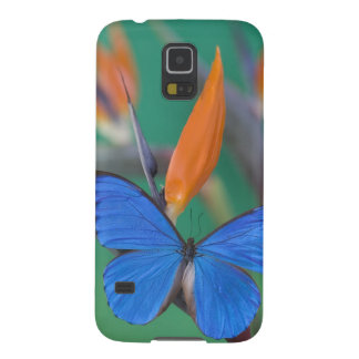 Sammamish Washington Photograph of Butterfly on 2 Galaxy S5 Cover