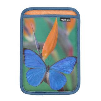 Sammamish Washington Photograph of Butterfly on 2 iPad Mini Sleeve
