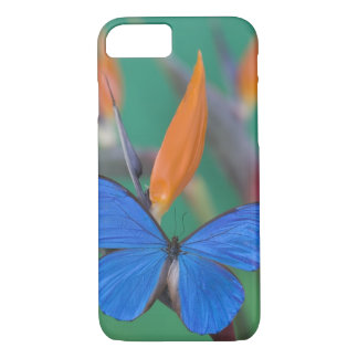 Sammamish Washington Photograph of Butterfly on 2 iPhone 8/7 Case