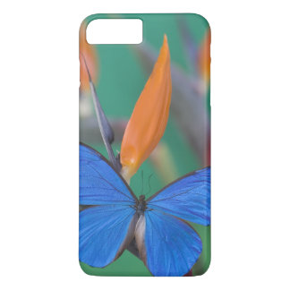 Sammamish Washington Photograph of Butterfly on 2 iPhone 8 Plus/7 Plus Case
