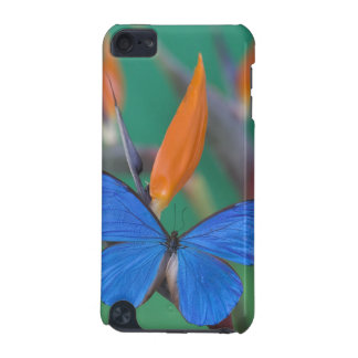 Sammamish Washington Photograph of Butterfly on 2 iPod Touch 5G Cover