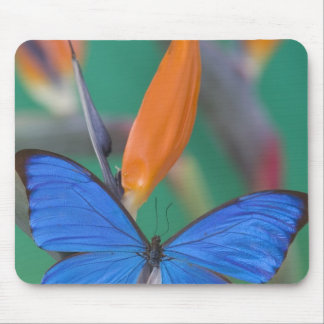 Sammamish Washington Photograph of Butterfly on 2 Mouse Mat