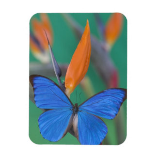 Sammamish Washington Photograph of Butterfly on 2 Rectangular Photo Magnet