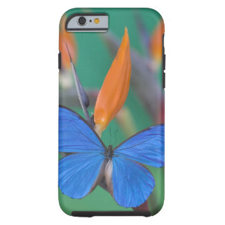Sammamish Washington Photograph of Butterfly on 2 Tough iPhone 6 Case