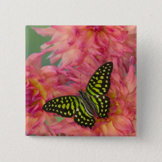 Sammamish Washington Photograph of Butterfly on 3 15 Cm Square Badge