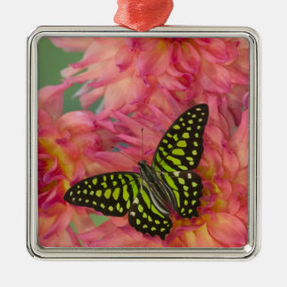 Sammamish Washington Photograph of Butterfly on 3 Christmas Ornament