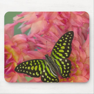 Sammamish Washington Photograph of Butterfly on 3 Mouse Mat
