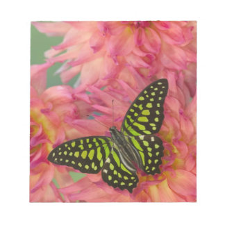 Sammamish Washington Photograph of Butterfly on 3 Notepad