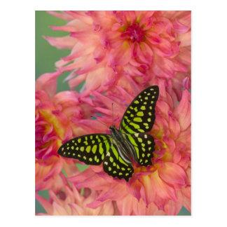 Sammamish Washington Photograph of Butterfly on 3 Postcard