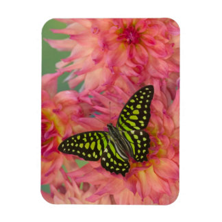 Sammamish Washington Photograph of Butterfly on 3 Rectangular Photo Magnet