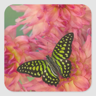 Sammamish Washington Photograph of Butterfly on 3 Square Sticker