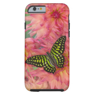 Sammamish Washington Photograph of Butterfly on 3 Tough iPhone 6 Case