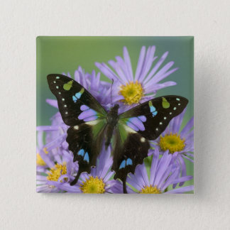Sammamish Washington Photograph of Butterfly on 4 15 Cm Square Badge