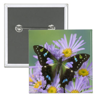 Sammamish Washington Photograph of Butterfly on 4 Pins