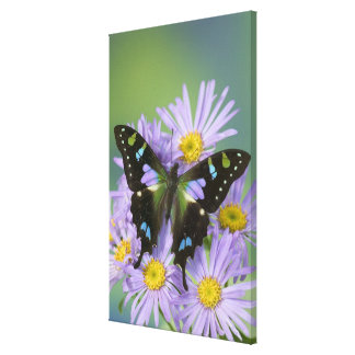 Sammamish Washington Photograph of Butterfly on 4 Canvas Print
