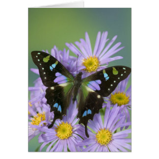Sammamish Washington Photograph of Butterfly on 4 Card
