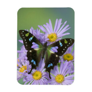 Sammamish Washington Photograph of Butterfly on 4 Magnet