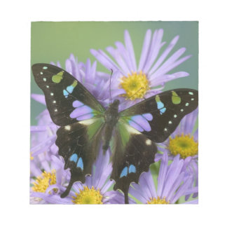 Sammamish Washington Photograph of Butterfly on 4 Notepad