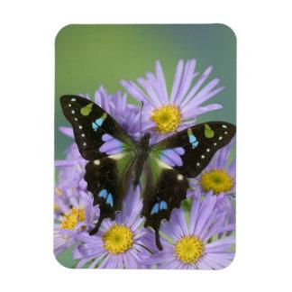 Sammamish Washington Photograph of Butterfly on 4 Rectangular Photo Magnet