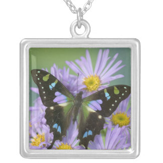 Sammamish Washington Photograph of Butterfly on 4 Silver Plated Necklace
