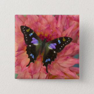 Sammamish Washington Photograph of Butterfly on 5 15 Cm Square Badge