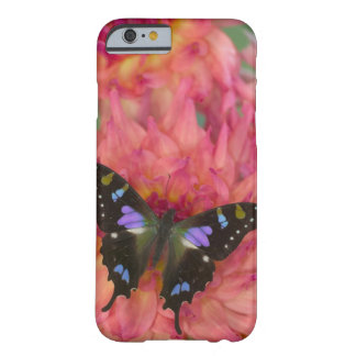 Sammamish Washington Photograph of Butterfly on 5 Barely There iPhone 6 Case