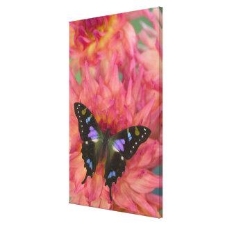Sammamish Washington Photograph of Butterfly on 5 Canvas Print