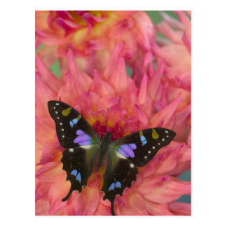 Sammamish Washington Photograph of Butterfly on 5 Postcard