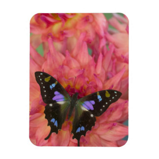 Sammamish Washington Photograph of Butterfly on 5 Rectangular Photo Magnet