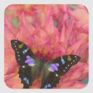 Sammamish Washington Photograph of Butterfly on 5 Square Sticker