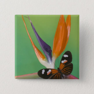 Sammamish Washington Photograph of Butterfly on 6 15 Cm Square Badge