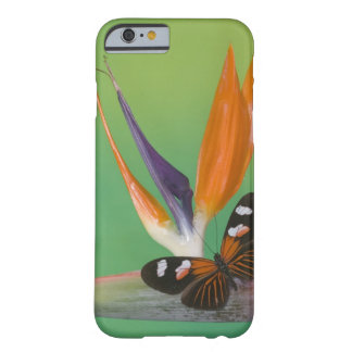 Sammamish Washington Photograph of Butterfly on 6 Barely There iPhone 6 Case