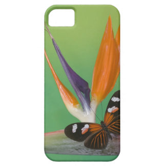 Sammamish Washington Photograph of Butterfly on 6 Case For The iPhone 5