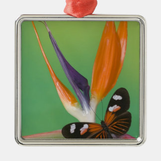 Sammamish Washington Photograph of Butterfly on 6 Christmas Ornament