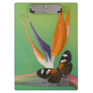 Sammamish Washington Photograph of Butterfly on 6 Clipboard
