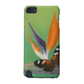 Sammamish Washington Photograph of Butterfly on 6 iPod Touch 5G Case