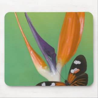 Sammamish Washington Photograph of Butterfly on 6 Mouse Mat