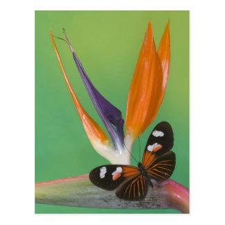 Sammamish Washington Photograph of Butterfly on 6 Postcard