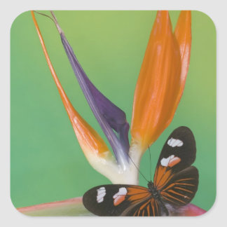 Sammamish Washington Photograph of Butterfly on 6 Square Sticker