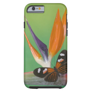 Sammamish Washington Photograph of Butterfly on 6 Tough iPhone 6 Case