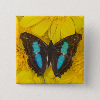 Sammamish Washington Photograph of Butterfly on 7 15 Cm Square Badge