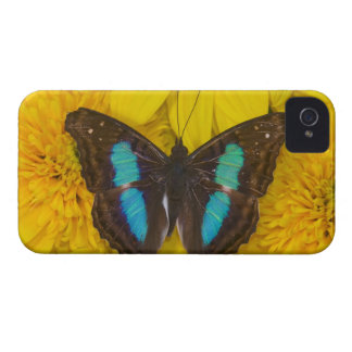 Sammamish Washington Photograph of Butterfly on 7 Case-Mate iPhone 4 Cases