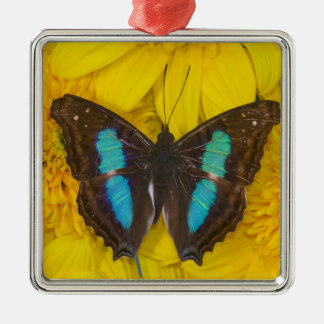 Sammamish Washington Photograph of Butterfly on 7 Christmas Ornament