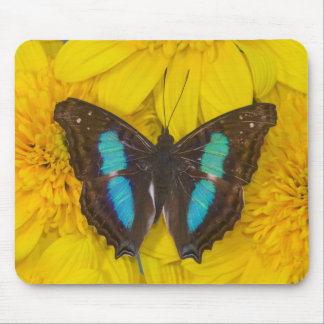 Sammamish Washington Photograph of Butterfly on 7 Mouse Mat