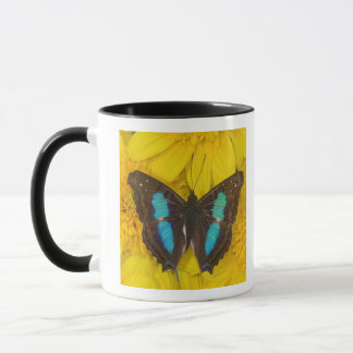 Sammamish Washington Photograph of Butterfly on 7 Mug