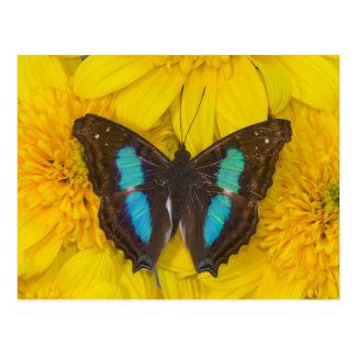 Sammamish Washington Photograph of Butterfly on 7 Postcard