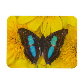 Sammamish Washington Photograph of Butterfly on 7 Rectangular Photo Magnet