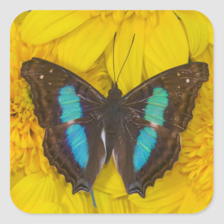 Sammamish Washington Photograph of Butterfly on 7 Square Sticker